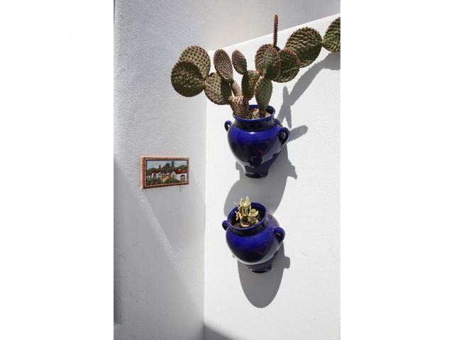 Cactus plants - Casa Arabella, Playa Blanca, Lanzarote